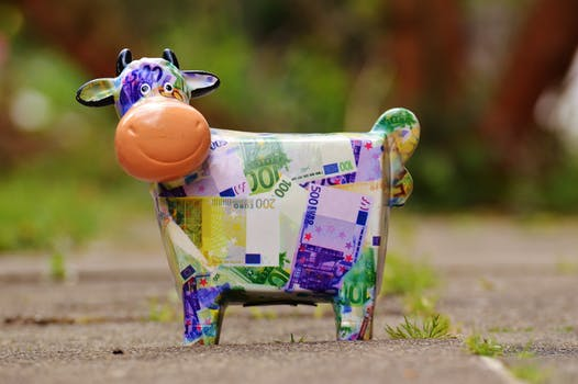 banknote cow